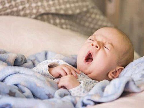 Nên tắm lá đinh lăng cho trẻ sơ sinh như thế nào cho đúng cách?